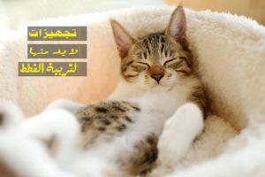 أهم التجهيزات التي تحتاجها لتربية القطط